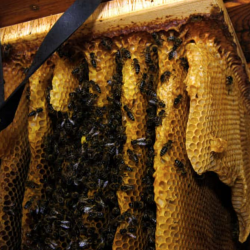 Bee Removal EP Next Guide